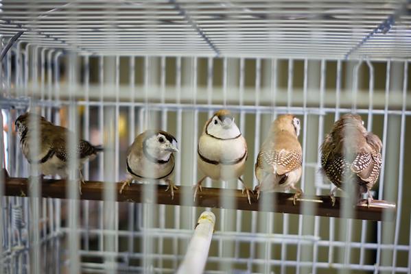 Tennessee Bird Show