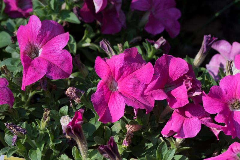 FlowersbyMacro-3848.jpg