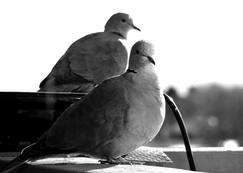 birds (195).JPG