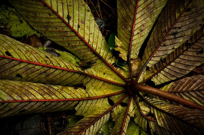 55 - Costa Rica - December '11.jpg