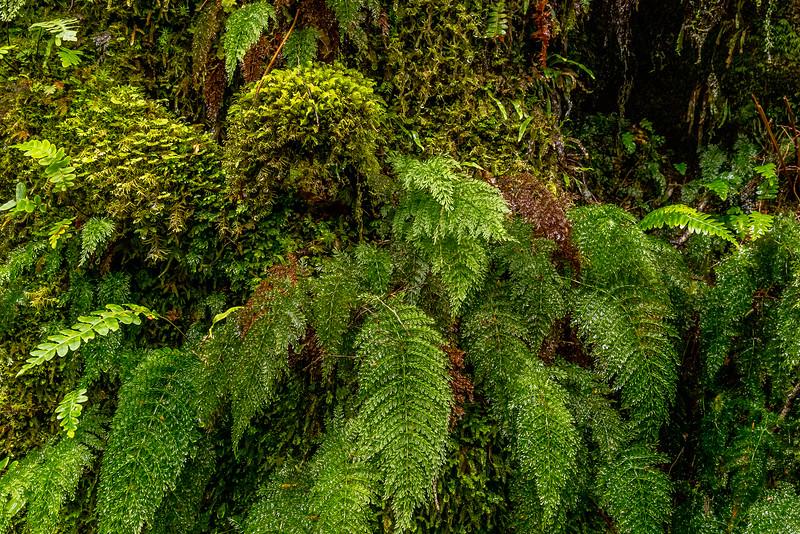 Das «Marian Creek» ist grün und feucht