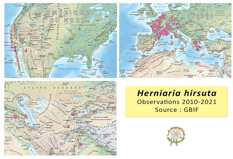 Herniaria hirsuta World copie.jpg