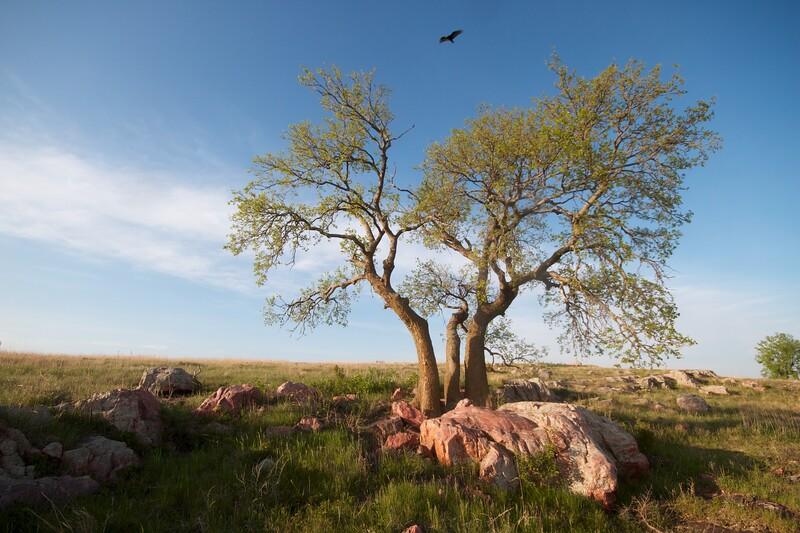 Turkey Vulture Blue Mounds State Park landscape Rock Co MN IMG_9978.jpg