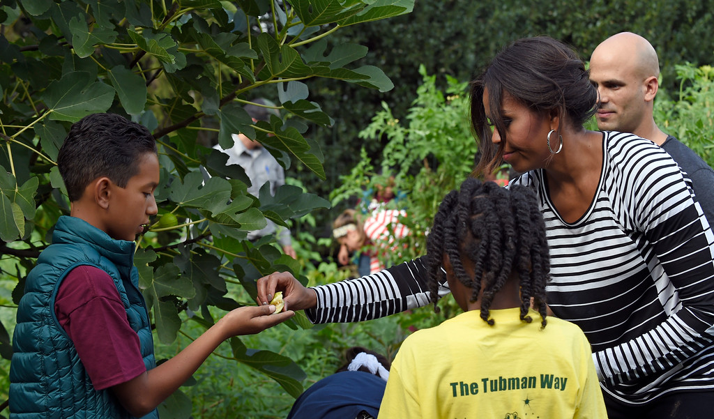 . First lady Michelle Obama passes a piece of fig to a student to taste during the annual fall harvest of the White House Kitchen Garden at the White House in Washington, Tuesday, Oct. 14, 2014. (AP Photo/Susan Walsh)