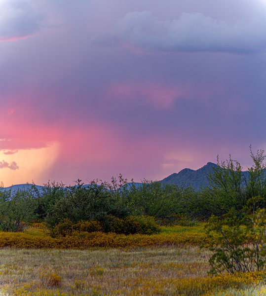 Distant rain in the Sonoran Desert of Arizona during sunset