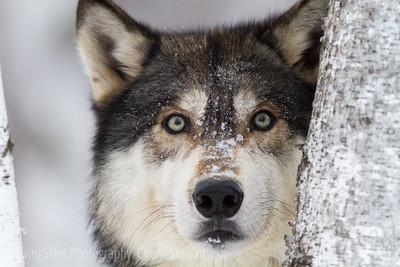 Winter Wildlife Connection 2013