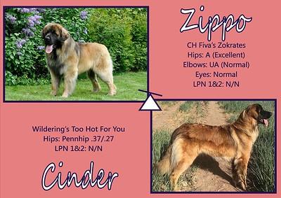 C Litter (Zippo x Cinder)/Bluebonnet P Litter
