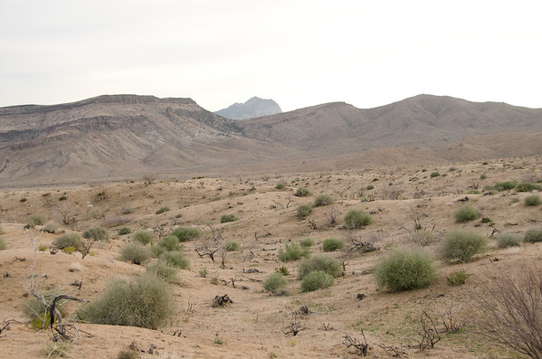 Mojave 2012