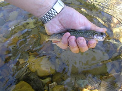 040628 Fish Creek Montana