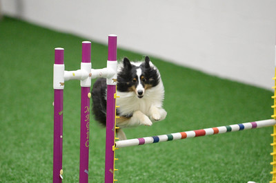 Y2K9s UKI Agility Trial August 8