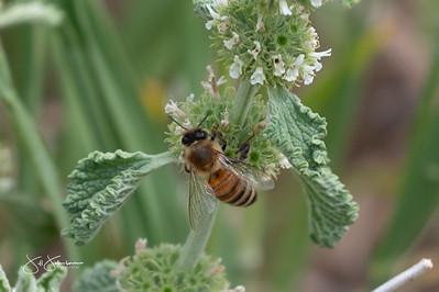Pollinators 2020