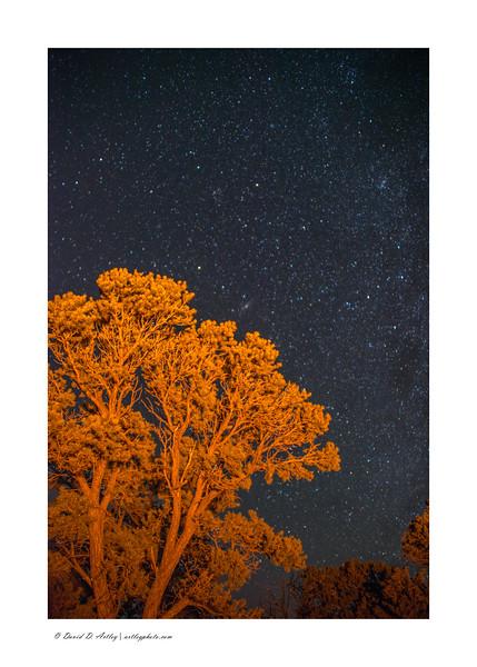 Tree reflecting campfire light and night sky, Zapata Falls, CO