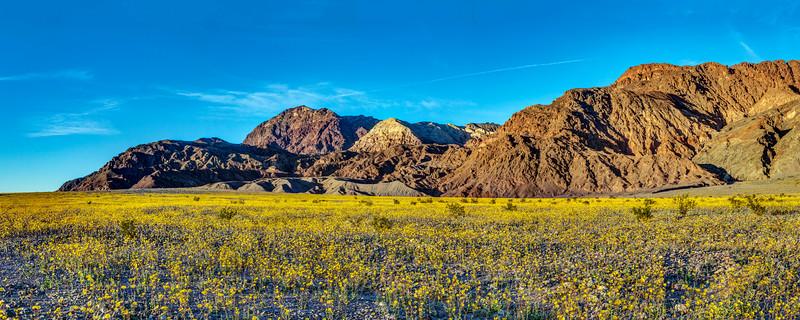 Death Valley Superbloom 2016