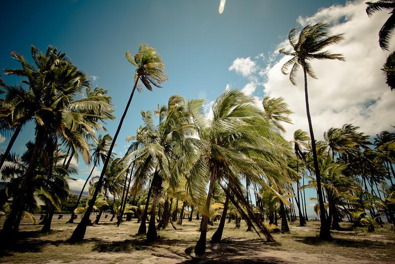 molokai palm trees-2.jpg