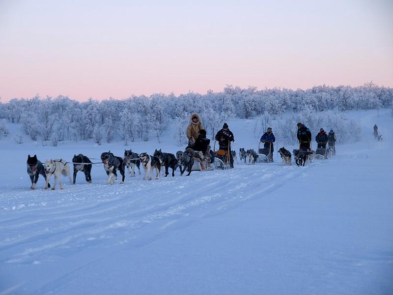 Dog sleds arrive.
