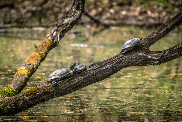 Turtles, Frogs, and Birds, Oh My! 4-9-19