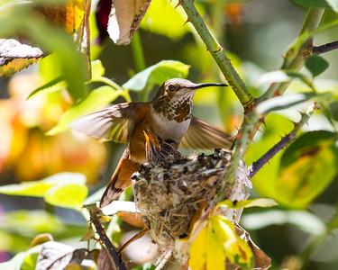 HummingBird 2012