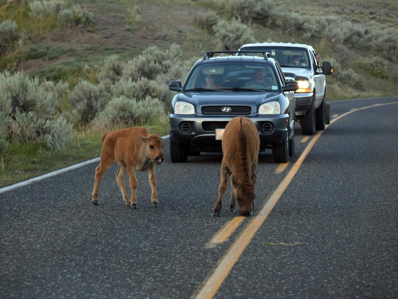 Yellowstone (44).jpg
