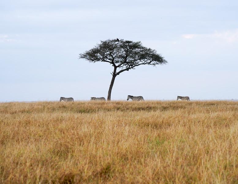 safari-2018-65.jpg