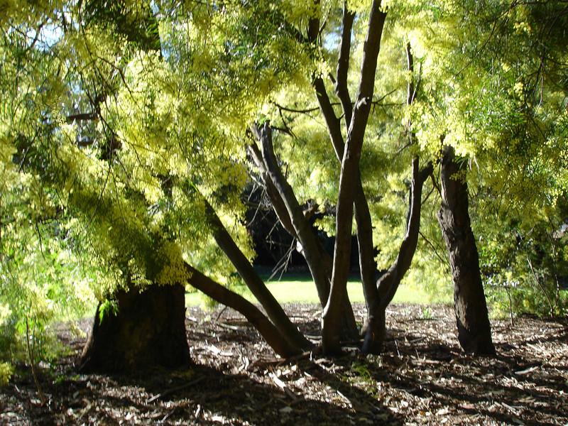 gorrez tree-6.jpg