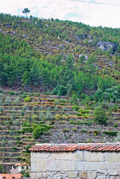"""Tarouca-Percurso """"Rota dos Monges de Cister""""- 20091004 -  7347.jpg"""
