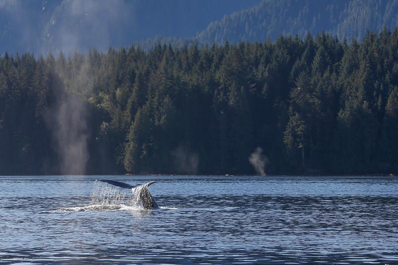 Mondays Humpback Whale.jpg