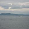 Bainbridge Island Ferry (SEA) - 14