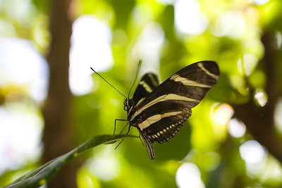 Carleton Butterfly Exhibit