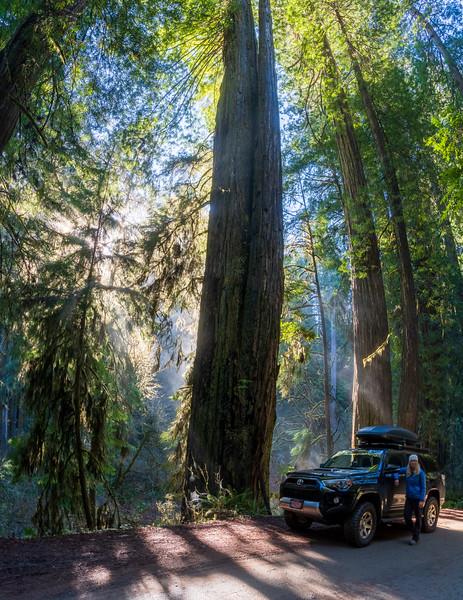 19-12-31 redwoods 0012-548-HDR-Pano.jpg