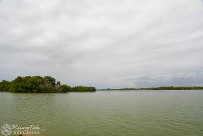 1230PM Mangrove Kayak Tour - Michalson, Michel, Koch & Winter
