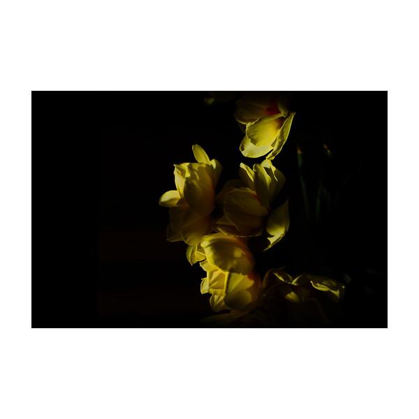 90_Flowers_10x10.jpg