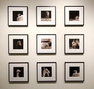 2013 Alex Katz • Summertime / Isa Leshko • Elderly Animals