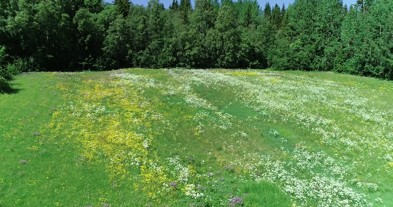 Aerial: flying over a flowering meadow towards the forest edge