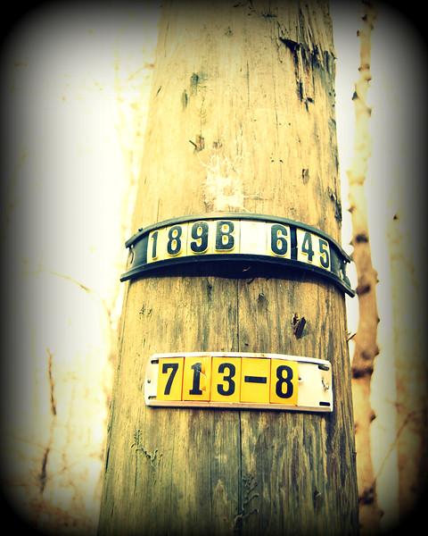 Tree Numbers.jpg