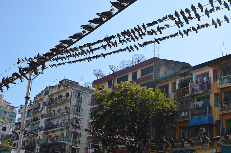 DSC_3672-city-pigeons.JPG