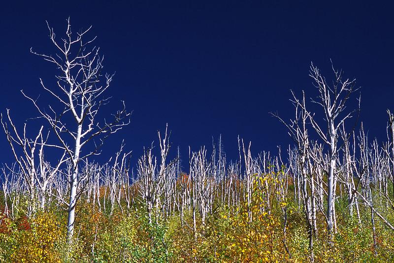 Sentier du mont du lac des Cygnes - Parc national des Grands-Jardins