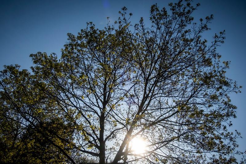 stromy spring-001.jpg