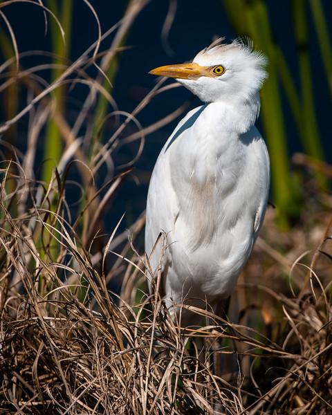 Viera Wetlands-4828.jpg