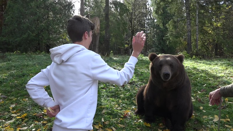 Tag the Grizzly bear