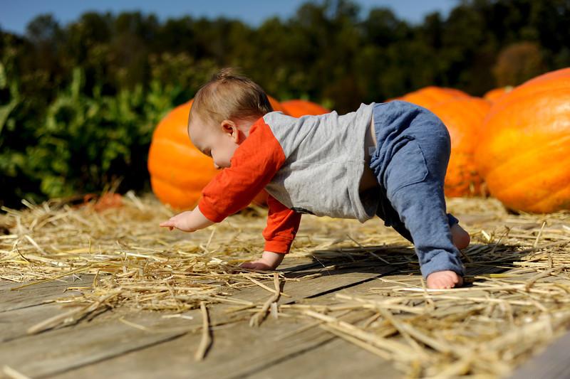 Pumpkin yoga