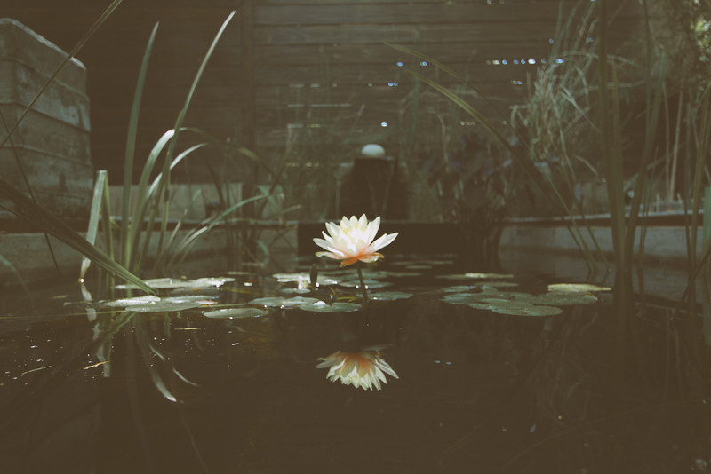 flora-24.jpg