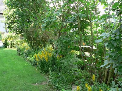 Staudigels Garden