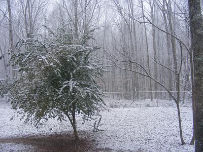2-12-10 Snow
