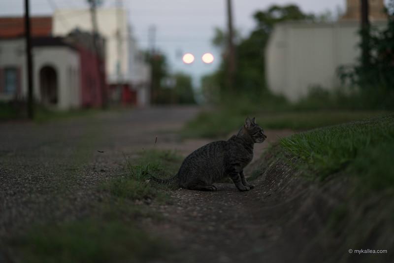 Pets-51.jpg