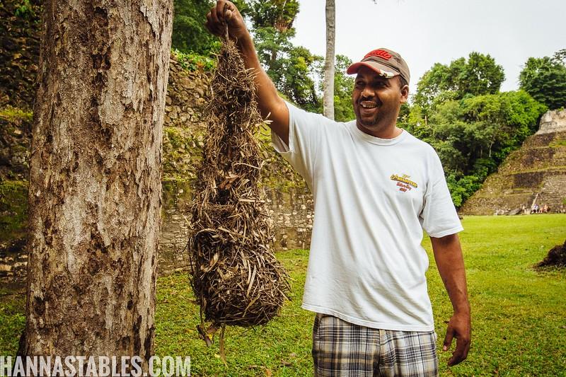San-Ignacio-Belize-48.jpg