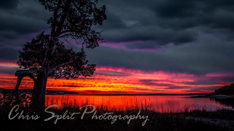 sunset redo with tree (1 of 1).jpg