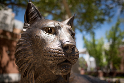 Wildcat Statue Reveal!