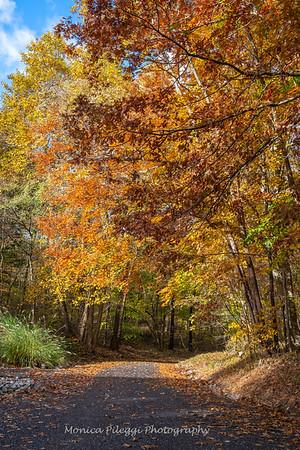 Fall Colors, Frederick Maryland, 3 November 2018