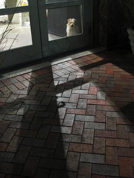 The guard dog. Canon SD770 p&s.