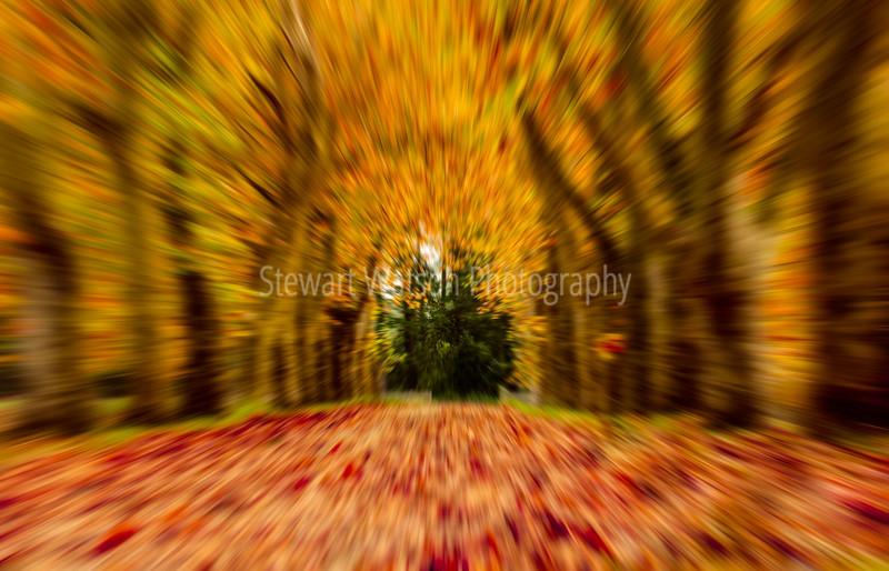 Autumn tree avenue abstract